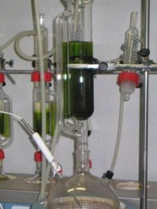 El Proyect ENERGREEN trata de lograr la eficiencia en el cultivo de Microalgas