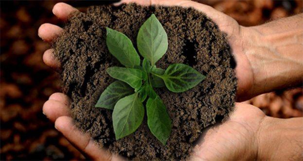 Tecnología y biofertilizantes contribuyen a la agricultura sostenible