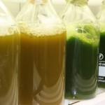 El proyecto Energreen identifica estrategias de cultivo de microalgas más eficientes para producir biodiésel