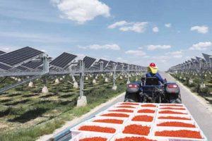 Solución fotovoltaica inteligente: infusión de vida en un paisaje desértico